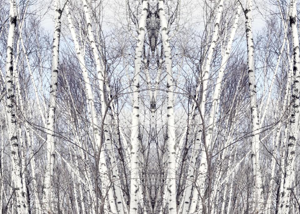 Birch Zen II, by Laura Grisamore