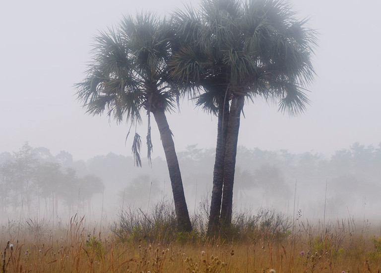 Fine art Florida wilderness scenes by Constance Mier Photography