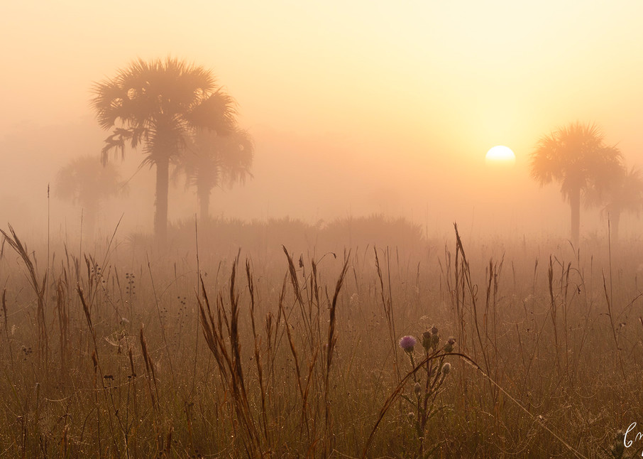 Constance Mier Photography - fine art scenes from Florida's wilderness areas