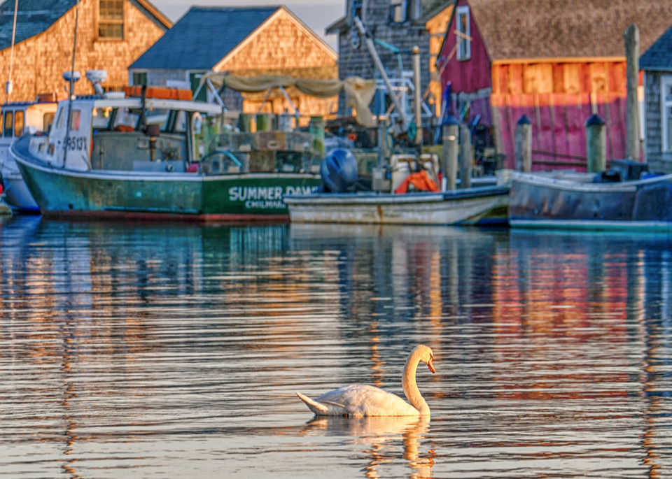 Menemsha Swan Art | Michael Blanchard Inspirational Photography - Crossroads Gallery
