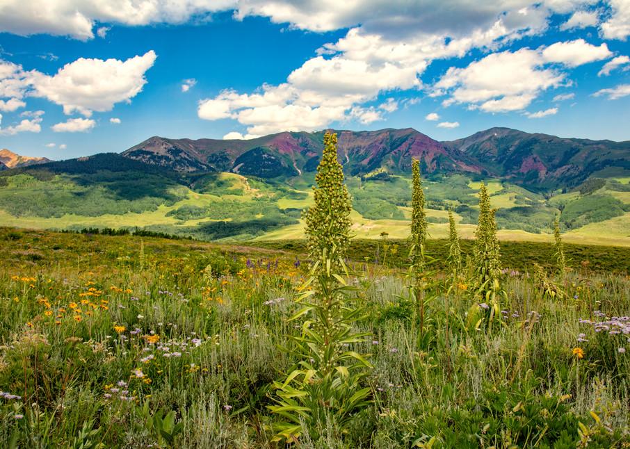 Monument Plant Snodgrass 7123 19   Photography Art | Koral Martin Healthcare Art