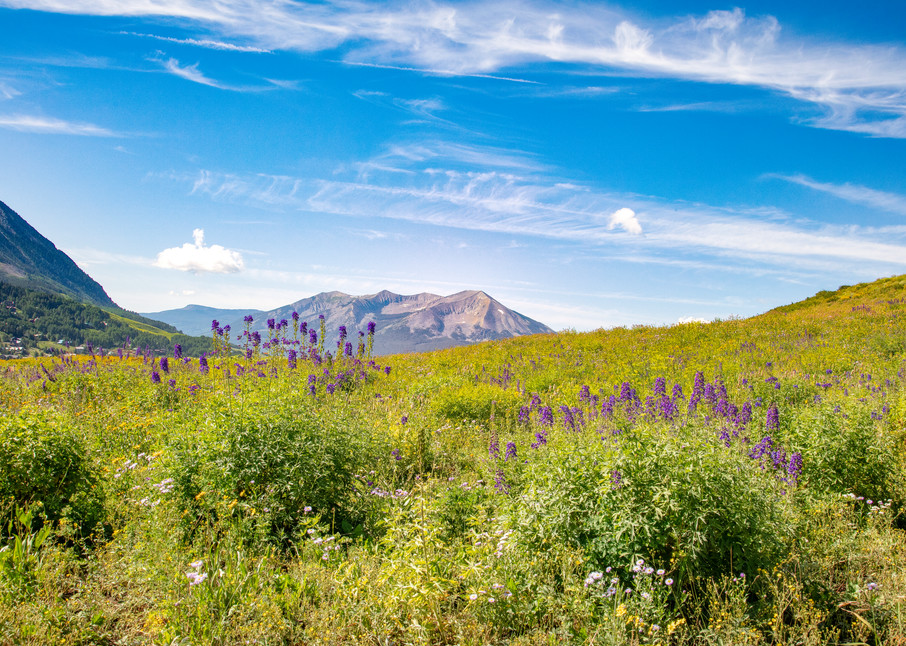 Purple Wildflowers Mountain6738   Photography Art | Koral Martin Healthcare Art