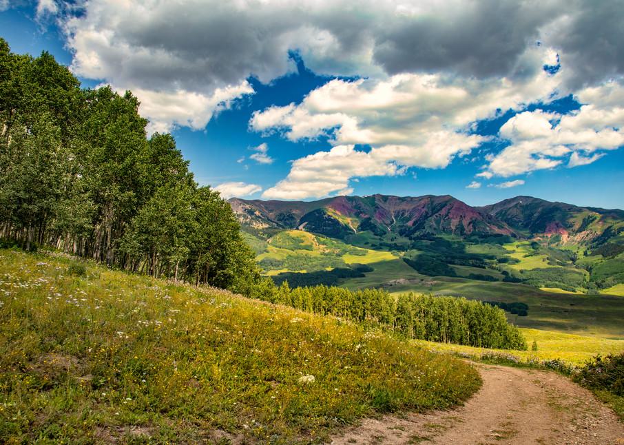 Snodgrass Trail Flowers Road Mountains 7089   Photography Art | Koral Martin Healthcare Art
