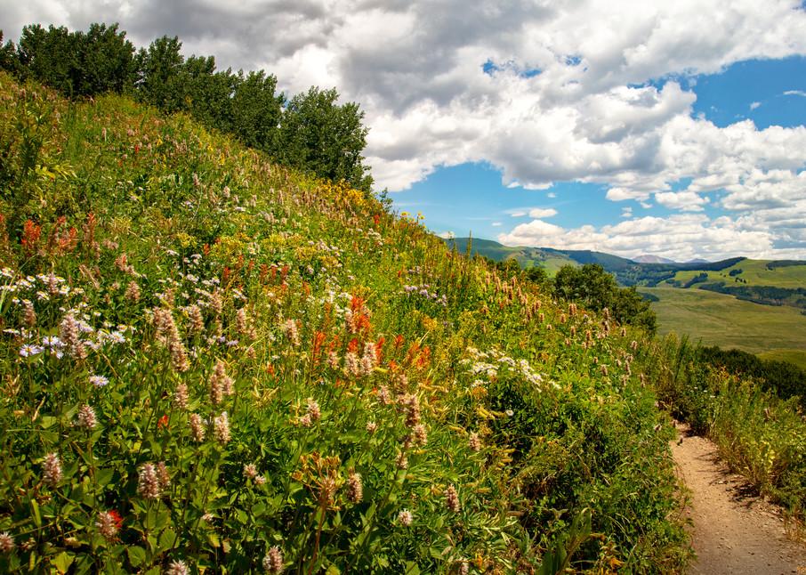 Snodgrass Trail Wildflowers Mountains 7061 G   Photography Art   Koral Martin Healthcare Art