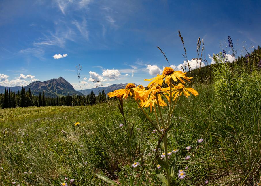 Snodgrass Trail Wildflowers Dfe2 6937 C   Photography Art | Koral Martin Healthcare Art