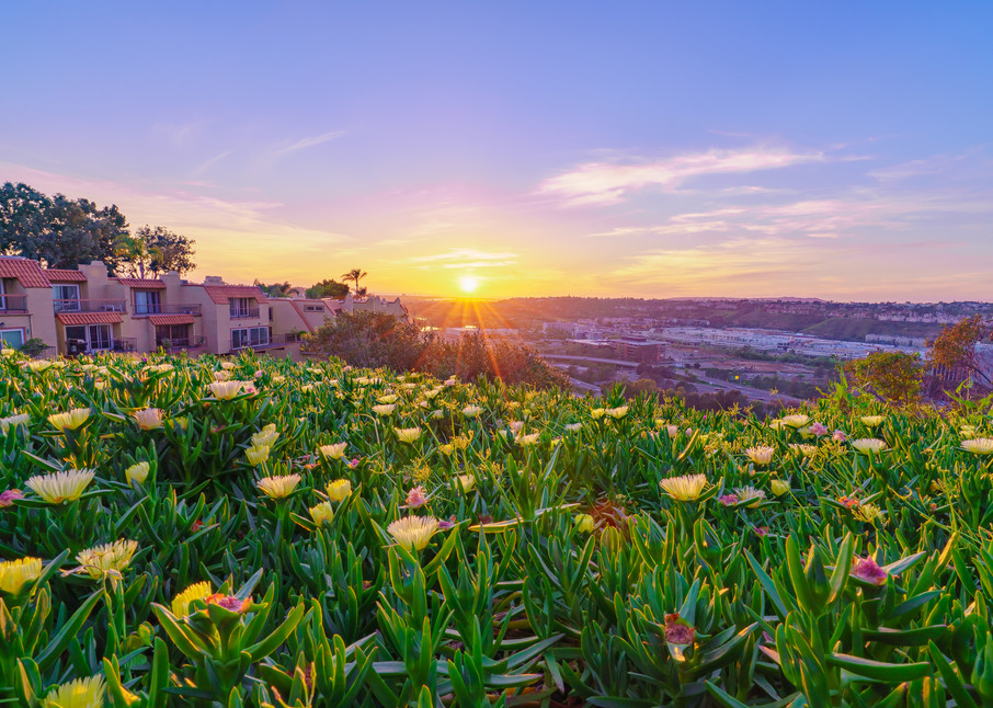 Full Bloom In University Heights Art | McClean Photography