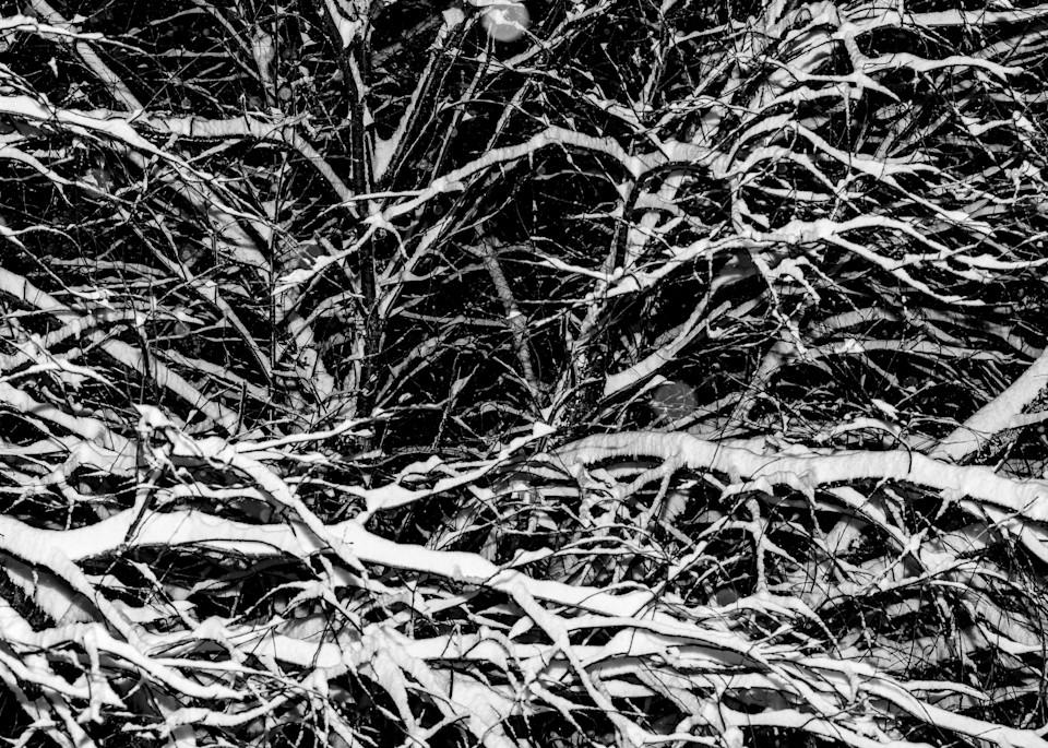 Winter Branches I by Jeremy Simonson