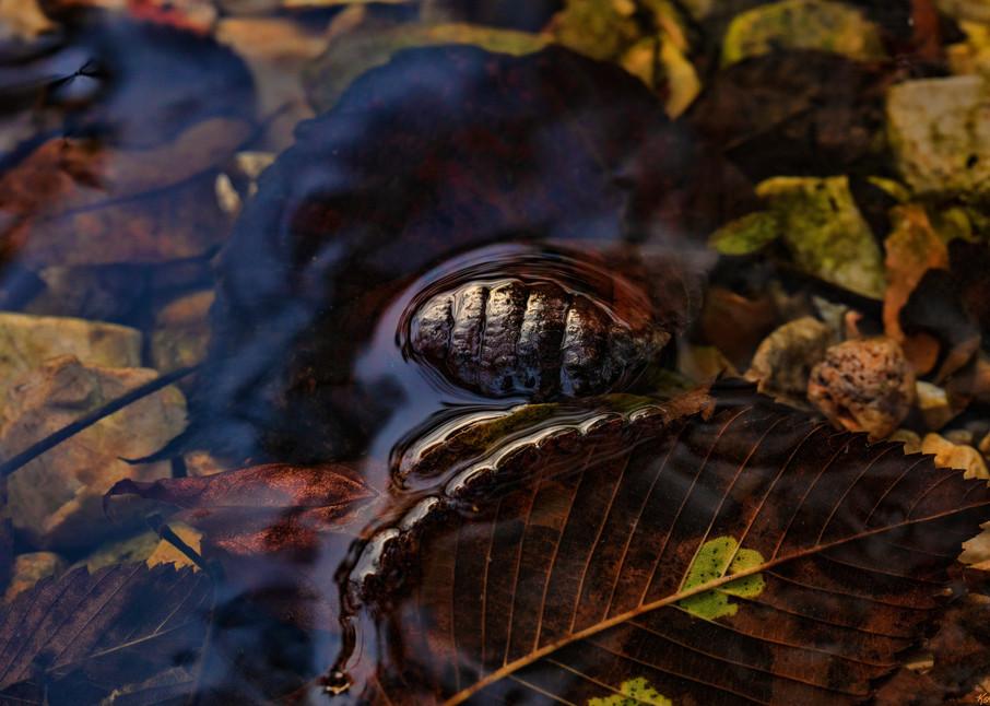 Leavesin Water0822   Photography Art | Koral Martin Healthcare Art