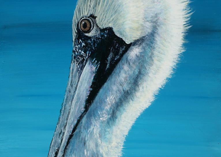"""""""Contemplation""""   Brown Pelican Art   Drawn To Nature"""