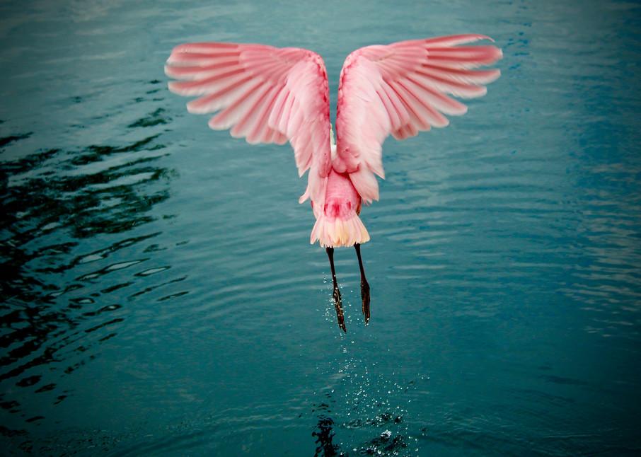 Angel Wings Art | CJ Harding