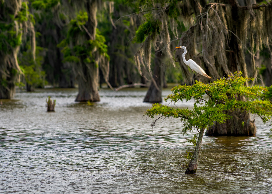 Keeping Watch - Louisiana swamp fine-art photography prints