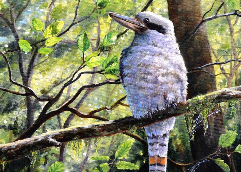 Kookaburra - Forest Friend