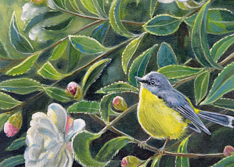 Yellow Robin - Afternoon Visit