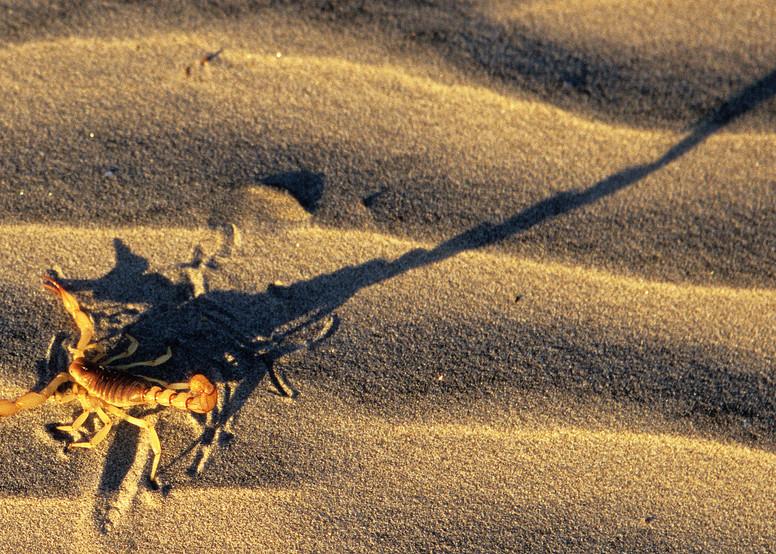Baja Shadows Photography Art | Josh Kimball Photography