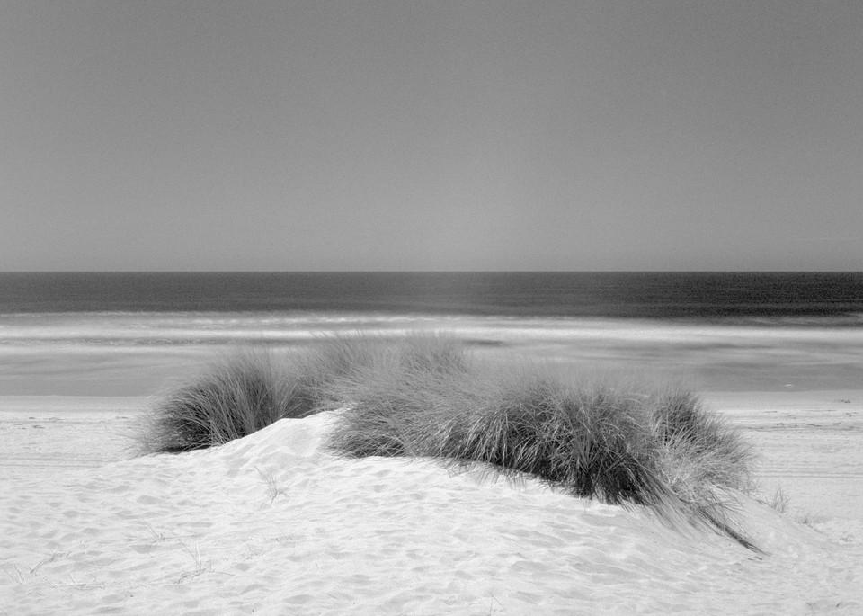 Dune Grass   Oceano Photography Art | Julian Whatley Photography