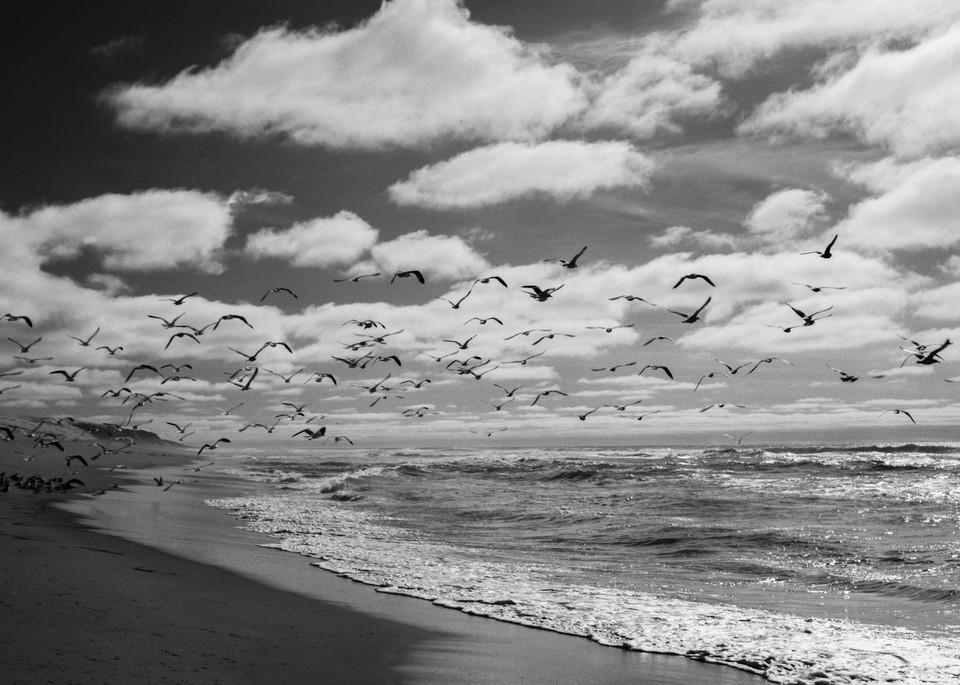 Seagulls   Guadalupe Dunes Photography Art | Julian Whatley Photography
