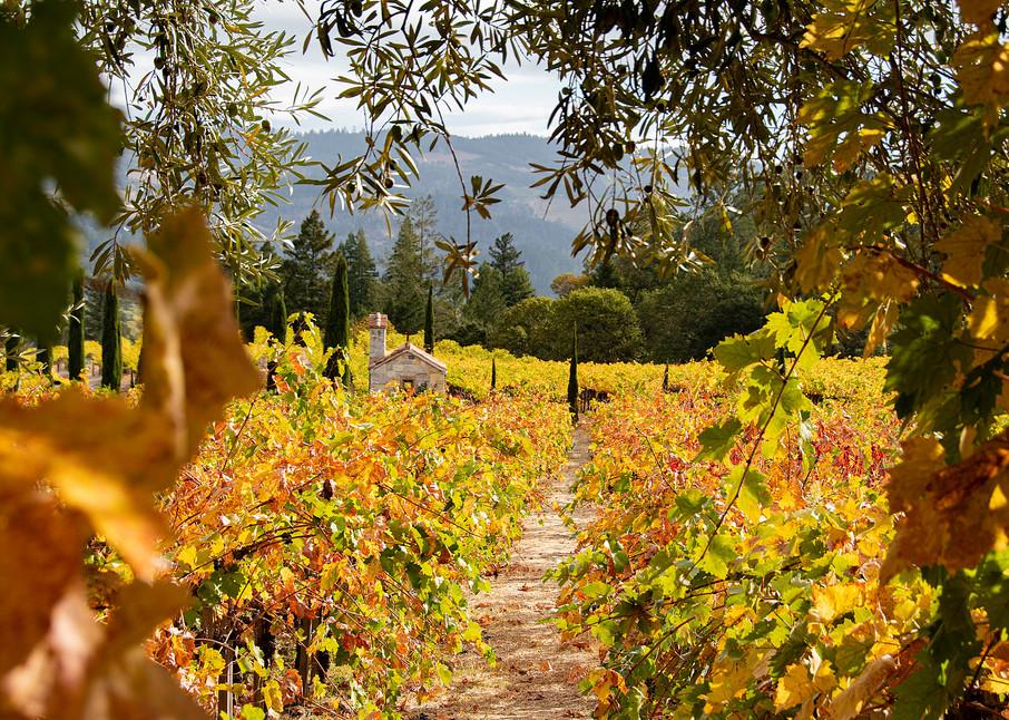 Chapel California Napa Valley Vineyard Photographs – Castello di Amorosa A Napa Valley Castle Winery In Calistoga  Fine Art Prints on Canvas, Paper, Metal & More