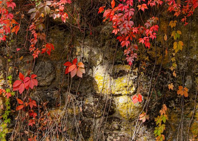 California Napa Valley Vineyard Photographs – Grapes Fine Art Prints on Canvas, Paper, Metal & More