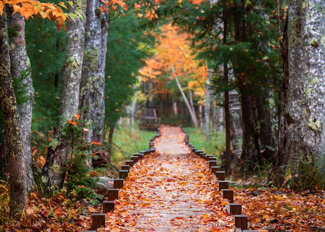 Autumn At Jesup Path Photography Art | Jesse MacDonald Photography