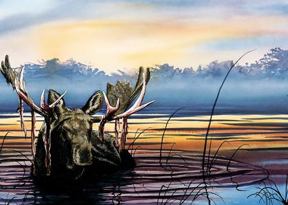Lake Snoozin' Moose Art Print of life in Yellowstone Park by Joe Ziolkowski