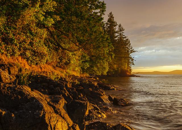 Coastal Forest at Sunset, Anacortes, Washington, 2016