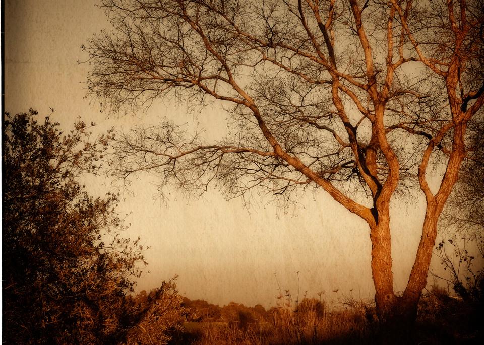 Mulberry Yellow Sunset Photography Art | David Frank Photography