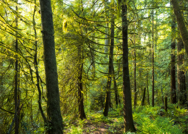 Kingdom Of Moss Art | James Alfred Friesen