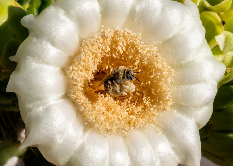 DP651 The Pollinator
