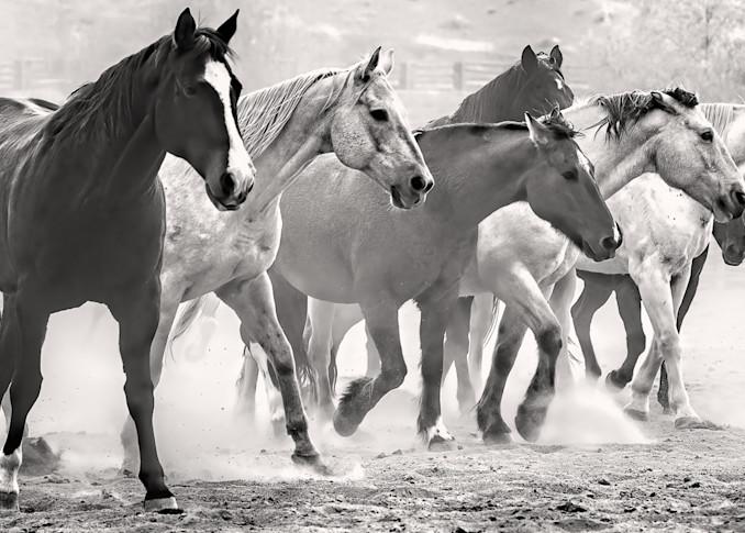 Horse  Group Bw Photography Art | Whispering Impressions