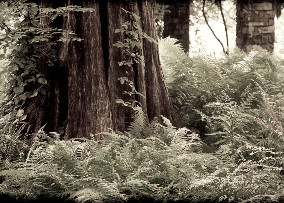 Redwood Photography Art | David Frank Photography