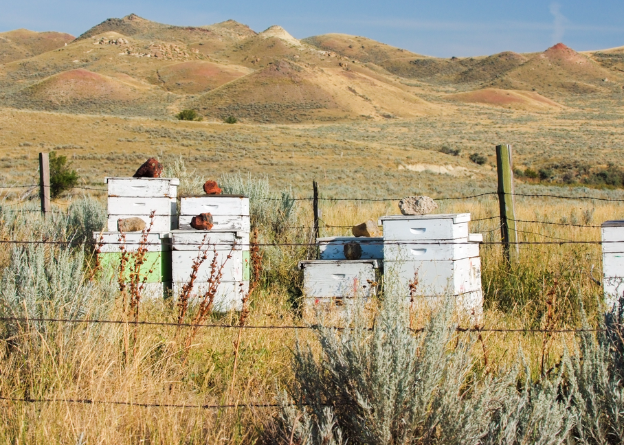 Dscf5635 Wyoming Beehives  Photography Art | Hatch Photo Artistry LLC