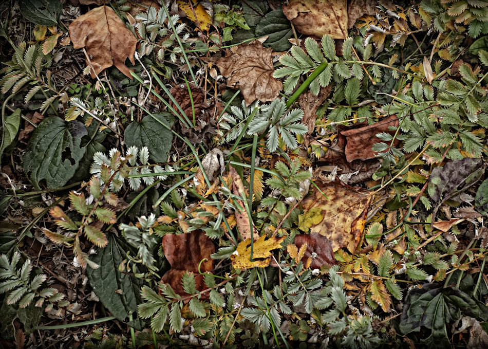 End Of The Season Garden Photography Art | David Frank Photography