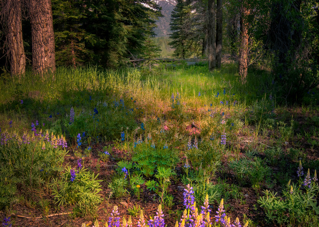 Alpine Enchantment Photography Art | McKendrick Photography
