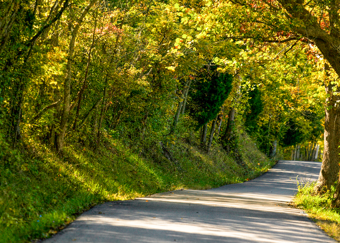 Kentucky Fall Photography Art | Hatch Photo Artistry LLC