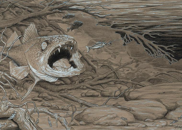 """""""Lunch on the Missouri River"""" is a fine art print of a Walleye by Montana artist, Joe Ziolkowski."""