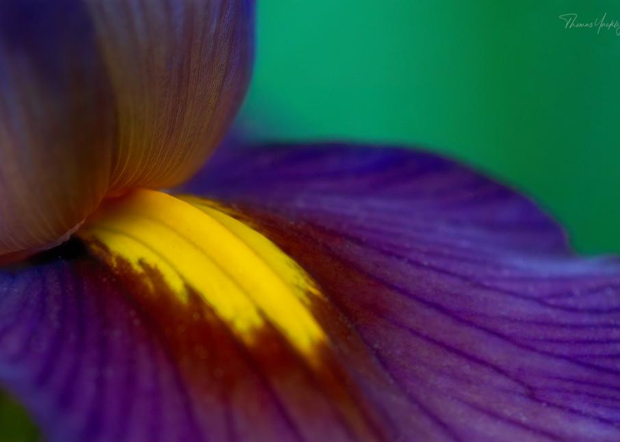 Iris Detail Photography Art   Thomas Yackley Fine Art Photography