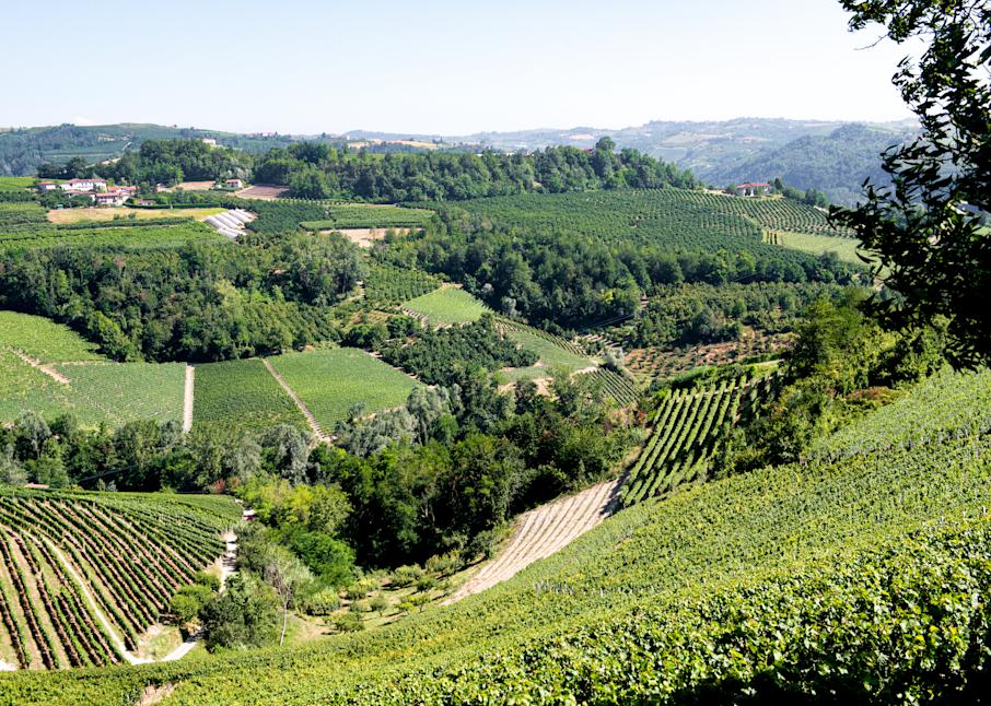 Northern Italian Vineyards  Photography Art | Hatch Photo Artistry LLC