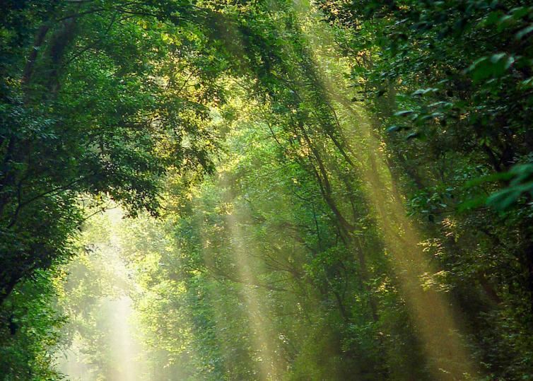 Morning's Glories Photography Art   Hatch Photo Artistry LLC