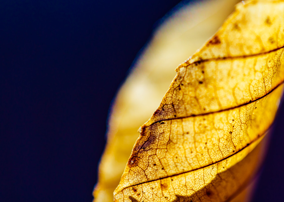 Nature Color 5380 Photography Art | Dan Chung Fine Art