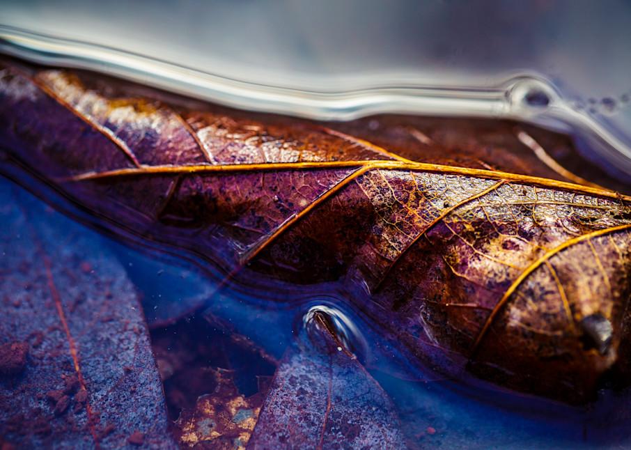 Nature Color 5413 Photography Art | Dan Chung Fine Art