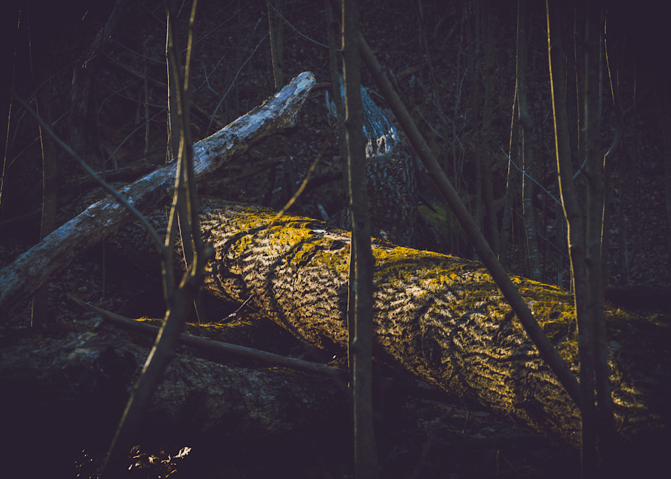 Nature Color 5878 Photography Art | Dan Chung Fine Art