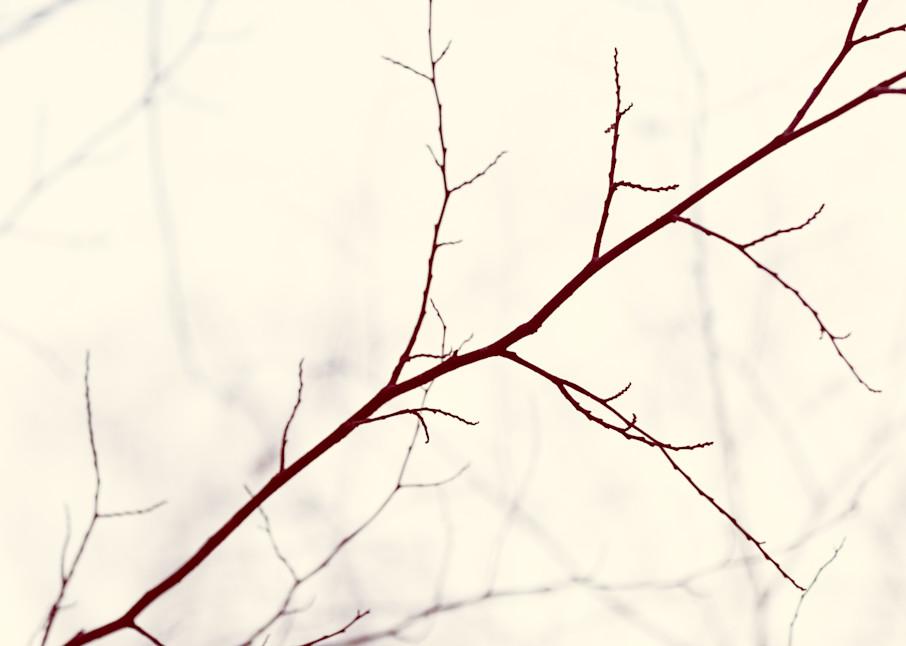 Nature Bw  4 Photography Art | Dan Chung Fine Art