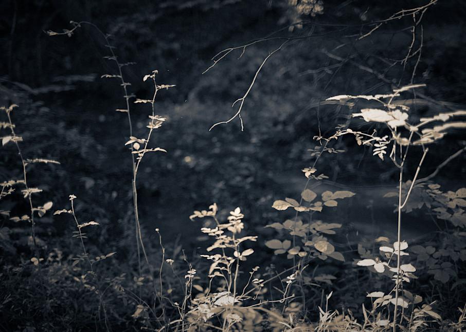 Nature Bw 4047 Photography Art | Dan Chung Fine Art