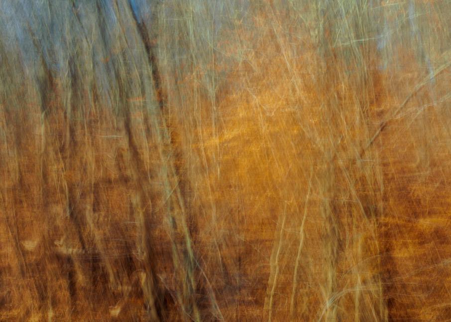 Nature Abstract 00211 Photography Art | Dan Chung Fine Art