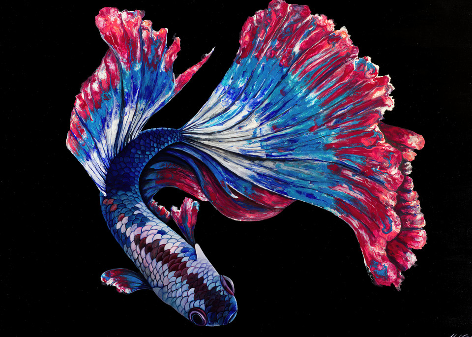 Freedom Betta Art | MMG Art Studio | Fine Art Colorado Gallery