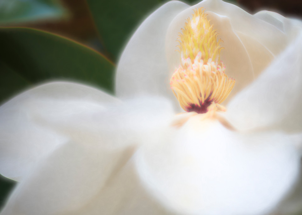 Magnolia Confection Fine-Art Print