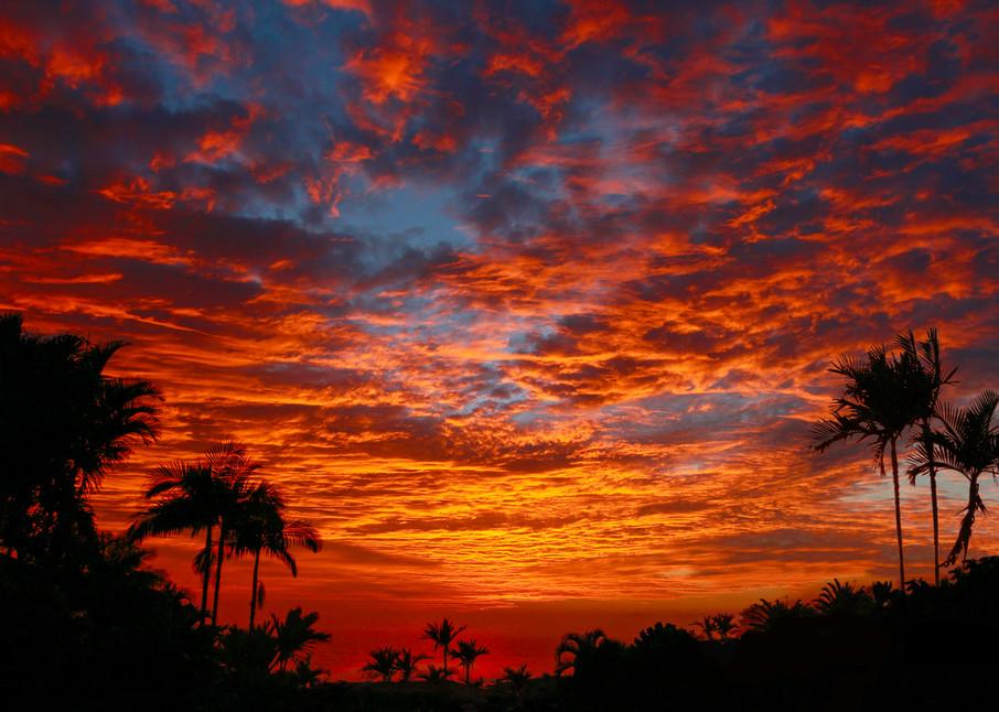 Kona Fire Sky Photography Art   Bird In Paradise