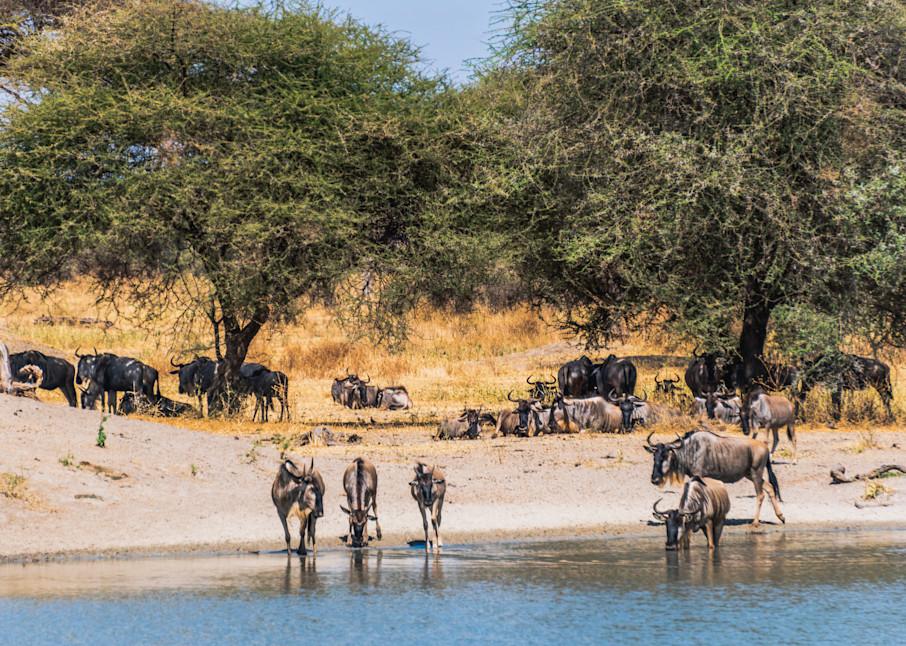 Africa, Tarangire National Park, safari