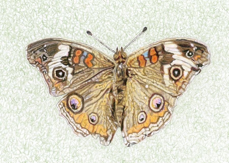 Common Buckeye Butterfly Art | Digital Arts Studio / Fine Art Marketplace