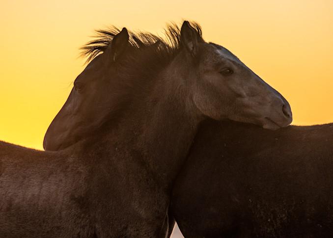 Foals At Dusk Photography Art | Brokk Mowrey Photography
